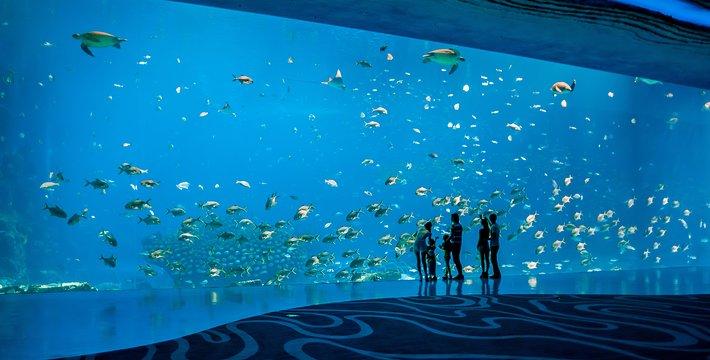 海洋主题乐园;全球首创大型游乐设施与珍贵动物展区相结合嘅独特设计